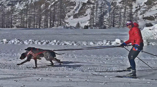 Skijoring at the World Champs 2019
