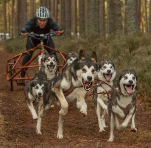 Mushing Terminology