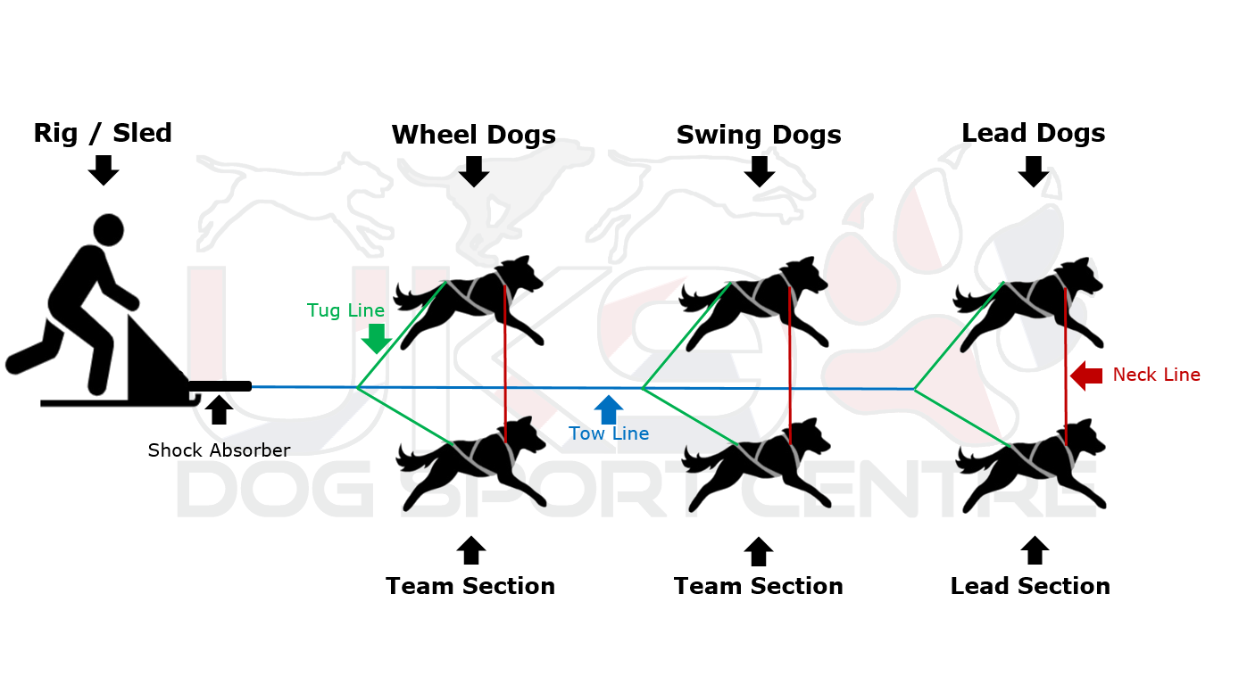 Sled Dog Team Formation Terminology